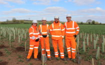 team planting young trees
