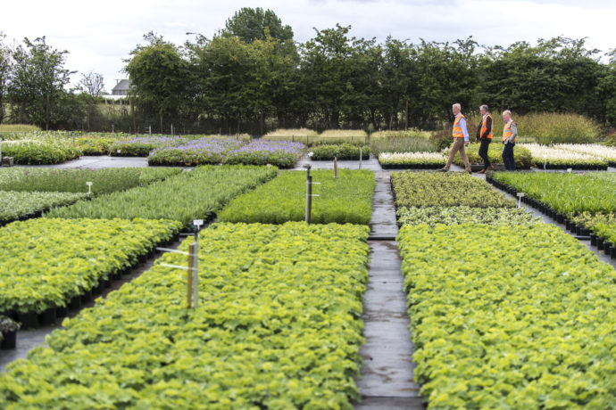 young plants growing in a nursery